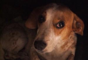 Cachorro com cara triste olhando para a câmera